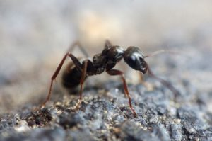 home remedies to get rid of ants outside